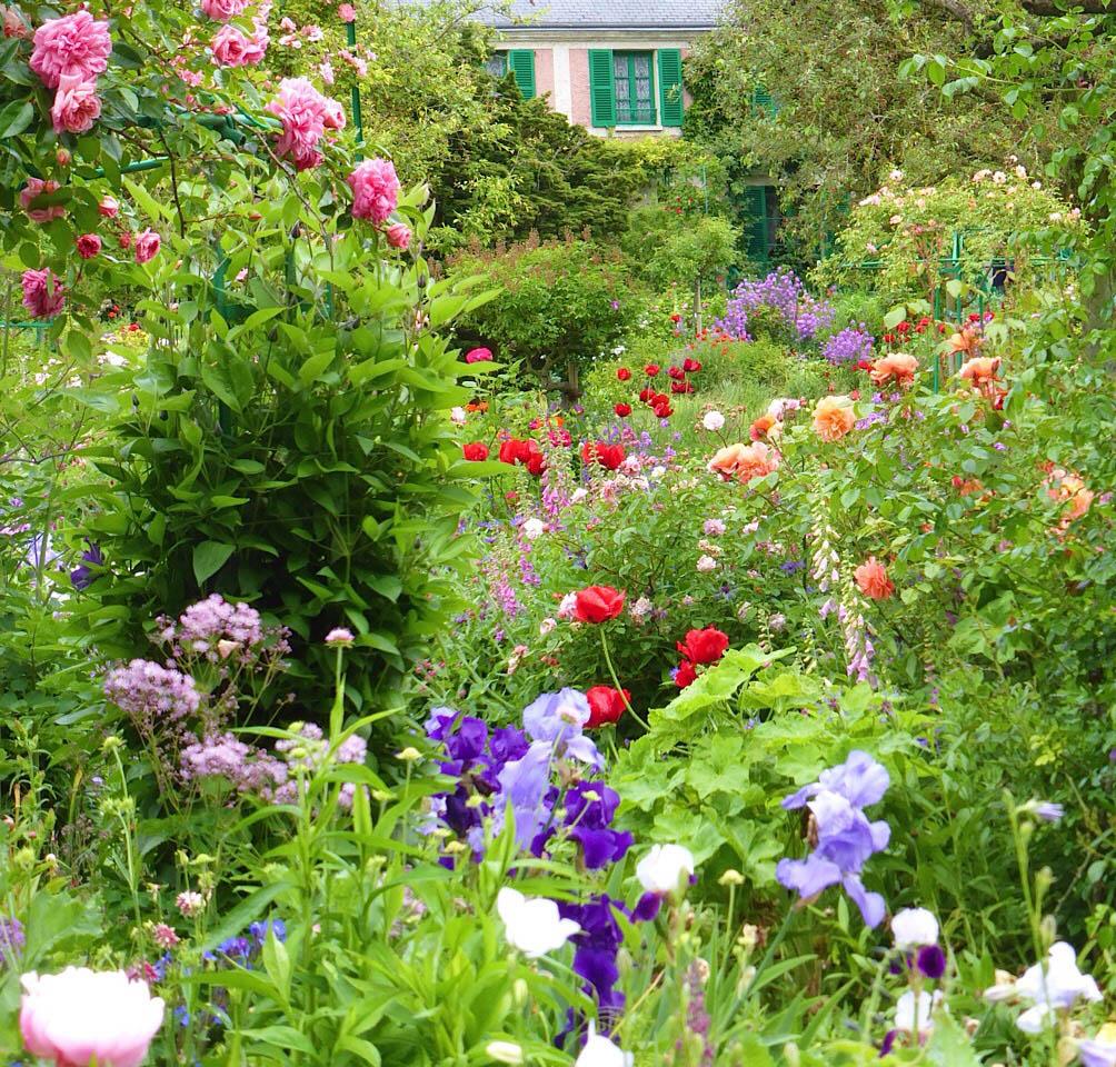 Iris et roses
